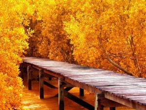 Puente de madera entre árboles otoñales