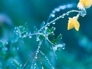 Gotas de agua en las ramas, hojas y flores de la planta