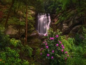 Cascada en un pintoresco rincón