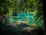 Lago rodeado de árboles verdes