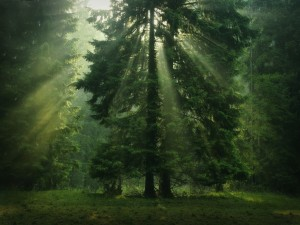 Los rayos del sol a través de las copas de los árboles