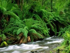Verdes helechos a orillas del río