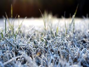 Helada sobre la hierba