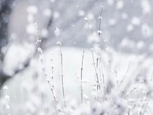 Plantas cubiertas de nieve