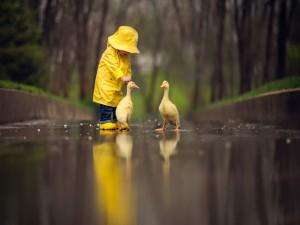 Caminando bajo la lluvia junto a dos patos