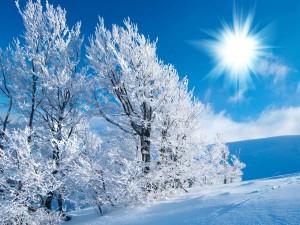 Sol brillando en un paraje nevado