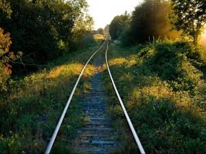 Vías del ferrocarril en el bosque soleado