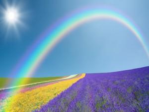 Sol y arcoíris sobre un campo de flores