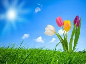 Tulipanes en la hierba