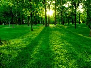 Sol iluminando el césped del parque