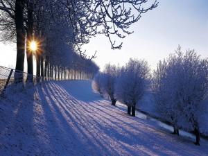 Sol tras los árboles nevados