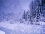 Invierno en la naturaleza