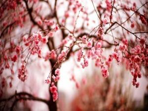 Flores rosas en las ramas de un árbol