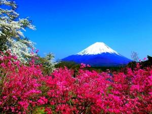 Hermosa vista primaveral del Monte Fuji