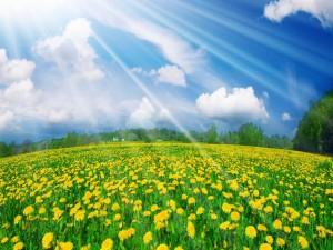 Rayos iluminando el campo de flores
