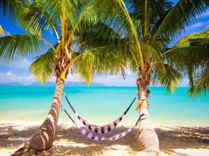 Hamacas entre las palmeras de la playa