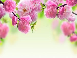 Hermosas flores rosas creciendo en las ramas