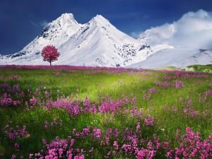 Flores al pie de las montañas nevadas