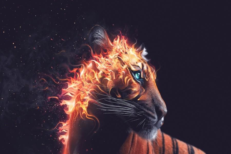 Tigre en llamas