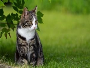 Gato sentado en la hierba