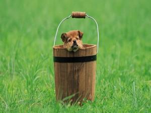Cachorro en un cubo
