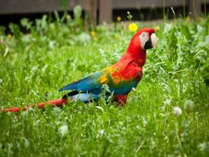Colorido guacamayo en la hierba