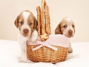 Perritos en una cesta