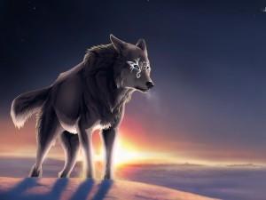 Lobo mágico con el sol poniéndose en el horizonte