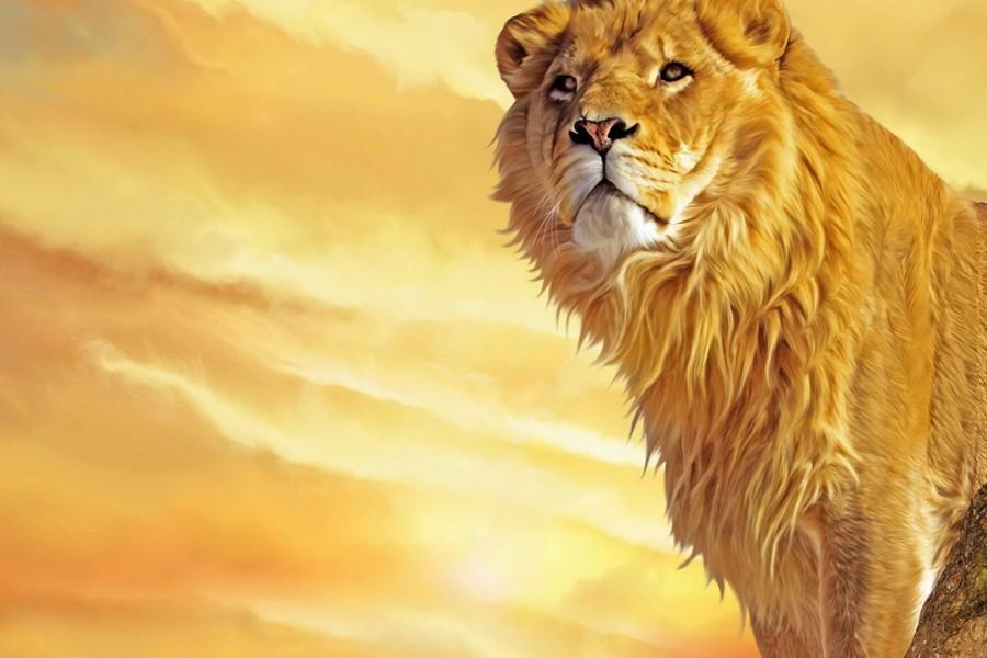 Worksheet. Fondos de leones Imgenes Leones