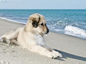 Perrito sentado en la playa