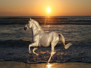Caballo blanco trotando en la playa