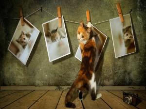 Gato colgando sus fotos