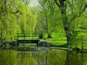 Estanque en el parque en un día de verano