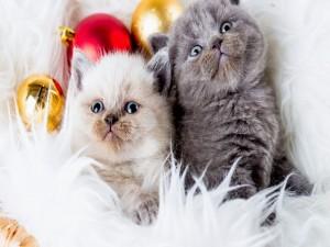 Adorables gatitos en Navidad