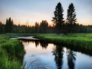 Verde naturaleza junto a un río