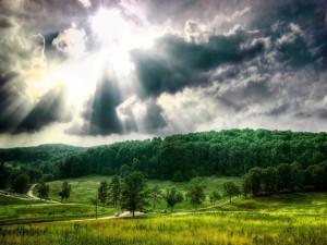 Los rayos del sol iluminan el verde bosque