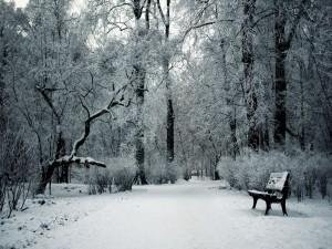 Día de invierno en el parque