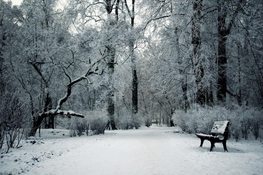 El parque de invierno vintage