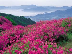 Flores color rosa en las montañas
