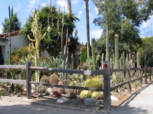 Jardín con impresionantes cactus