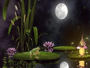 Rana en una noche de fantasía