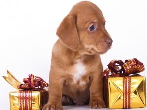 Un afectuoso perro entre dos cajas de regalo