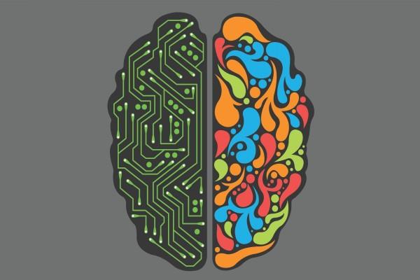 Los dos hemisferios del cerebro humano