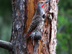 Pájaro carpintero en un tronco de árbol