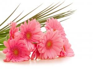 Hermoso ramo de gerberas de color rosa