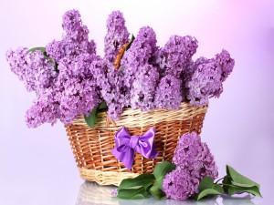 Una cesta con flores lilas