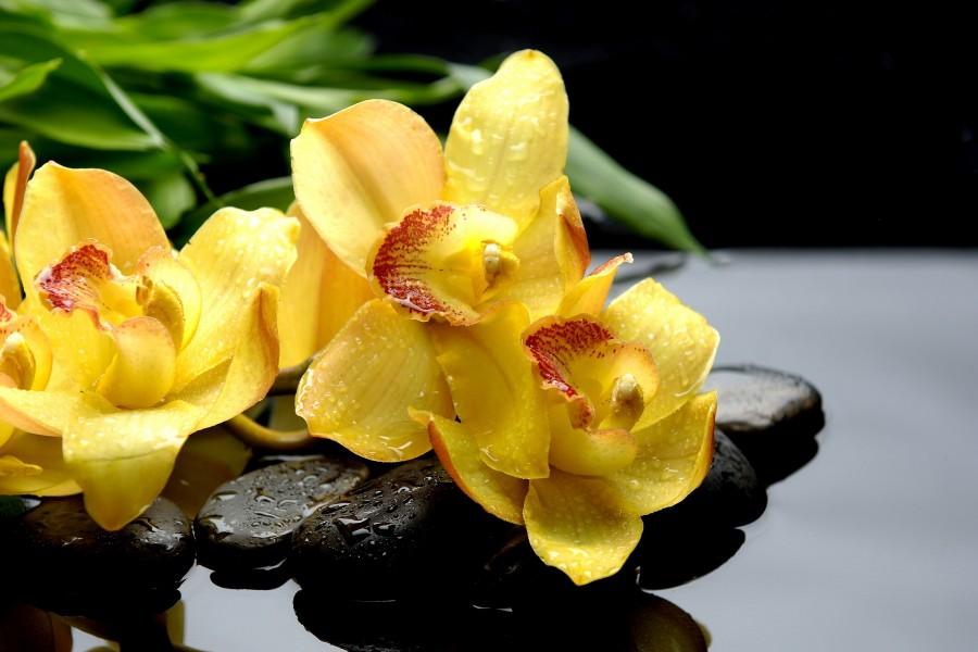 Orquídeas amarillas sobre unos guijarros