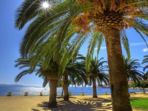 Palmeras en la playa bajo un radiante sol
