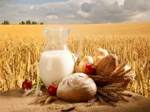 Leche, pan y trigo