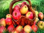 Manzanas en una cesta de madera